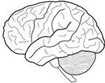 Case Study Brain